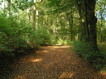 Hampshire Mooi Veluwe